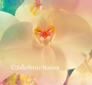 etsy1 orchid1