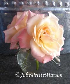 etsy13 rosesinjar