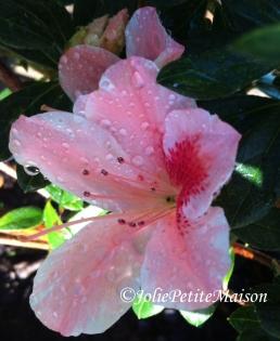 etsy15 hibiscus1