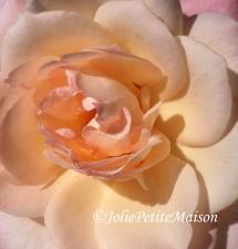 etsy16 rose3