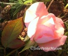 etsy18 rose4