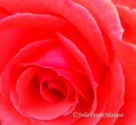 etsy19 rose6