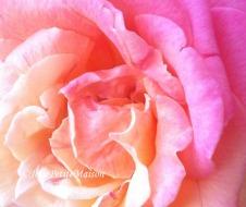 etsy2 rose1