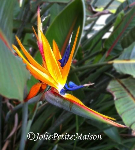 etsy21 bird of paradise1
