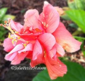 etsy22 hibiscus2