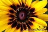 etsy24 daisy2