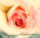 etsy25 rose6