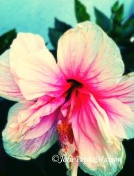 etsy26 hibiscus3