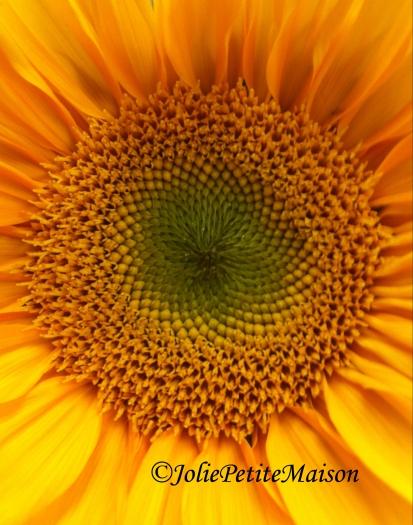 etsy27 sunflower4