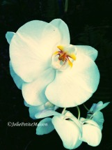 etsy3 orchid2
