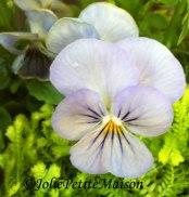 etsy30 violets1