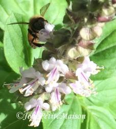 etsy4 bee1