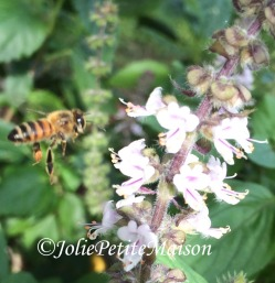 etsy5 bee2