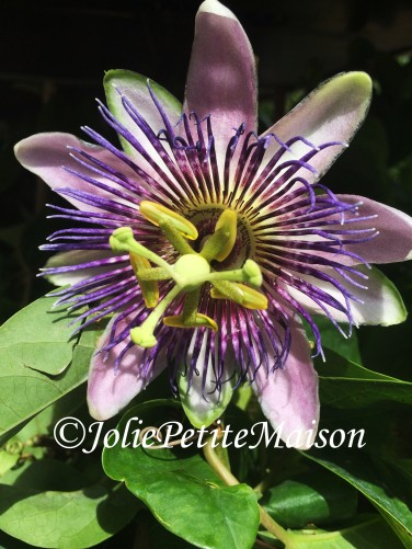 etsy8 passion flower1
