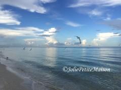 etsy43 beach birds4