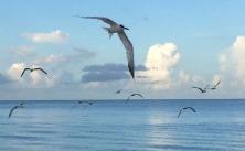etsy44 beach birds4