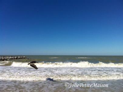 etsy45 beach birds5