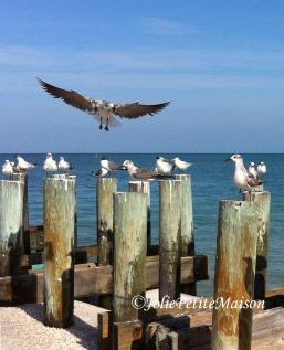 etsy46 birds beach5