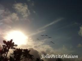 etsy47 beach birds6