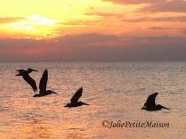etsy48 beach birds sunset7