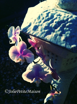 etsy71 orchid8