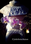 etsy72 orchid9