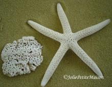 etsy74 shells2 starfish