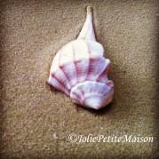 etsy75 shells3