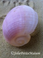 etsy76 shells3
