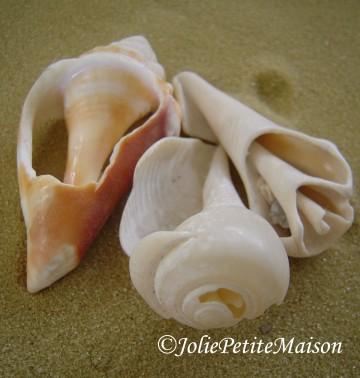 etsy77 shells4
