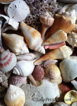 etsy78 shells6