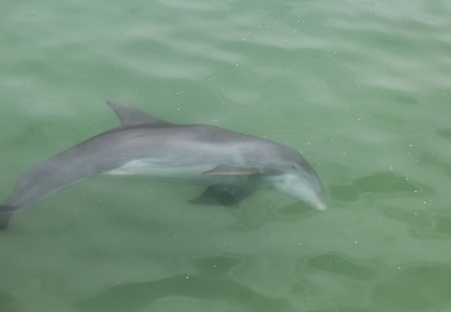 dolphin at pier5